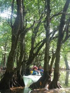 浦内川マングローブカヌー&クーラの滝
