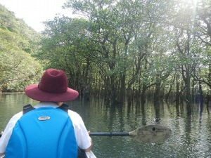 マイラ川マングローブカヌー&マイラの滝トレッキング
