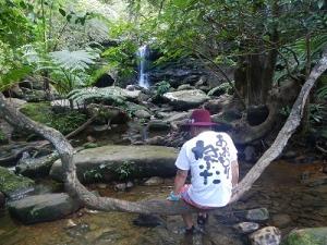 浦内川マングローブカヌー&クーラの滝トレッキング